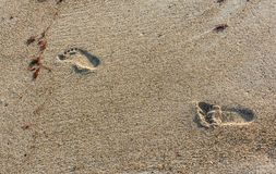 A Four Years Old Footprints in the Sand. Of Hampton Beach, New Hampshire Stock Photo