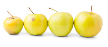 Four Yellow Apples With Stalk Royalty Free Stock Images