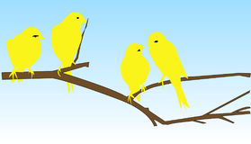 Four Yellow Birds on A Brance Stock Image