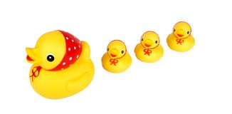 Four yellow ducks isolation Royalty Free Stock Images