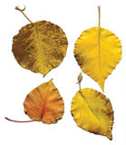 Four Yellow Leaves Stock Images