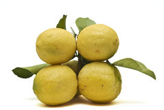 Four yellow lemons. Stock Photography