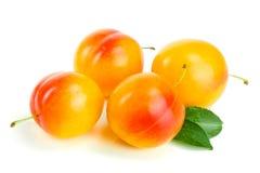 Four yellow plum isolated on white background stock image