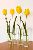 Four yellow tulips Royalty Free Stock Image