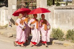 Four young Burmese nuns in pink, orange and red robes walking royalty free stock photography