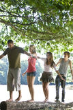Four young people balancing on a log in a park Stock Images