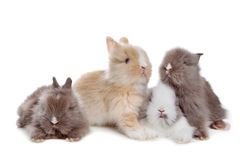 Four young rabbits in a row Stock Photos