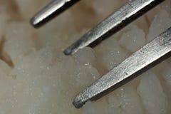 Fourchette de dents en riz cuit photos libres de droits
