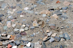 Foure butterflies in the sand and stones Royalty Free Stock Images