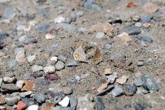 Foure-Schmetterlinge im Sand und in den Steinen Lizenzfreie Stockbilder