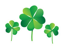 Fourleaf clover. Large four-leaf clover with two smaller three-leaf clovers Royalty Free Stock Images