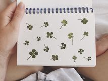Fourleaf clover Royalty Free Stock Photography