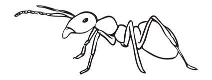 fourmi Image libre de droits