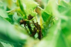 Fourmi d'attaque d'insectes de scarabées Images stock