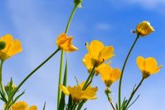 Fourmi sur la fleur Photo libre de droits