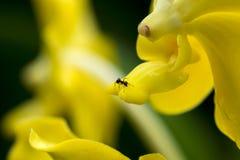 Fourmi sur la fleur Images stock
