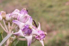 Fourmi sur une fleur Image libre de droits