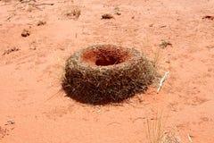 fourmilère Photos libres de droits