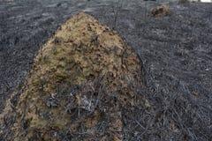 Fourmilière dans le domaine de burn-out Image libre de droits