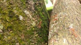 fourmis Photographie stock libre de droits