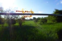 fourmis Photo stock