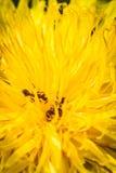 fourmis Image libre de droits