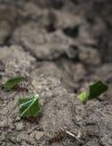 Fourmis assumant des pièces de feuille à leur nid Photographie stock libre de droits