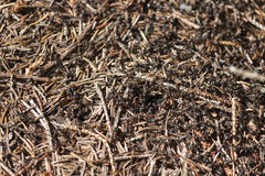Fourmis dans une fourmilière Image stock