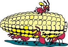 Fourmis mangeant du maïs Images libres de droits