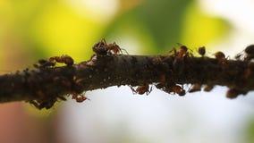 Fourmis marchant sur l'arbre clips vidéos