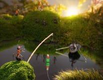 Fourmis pêchant sur le lever de soleil, contes de fourmi Images stock