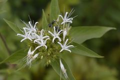 Fourmis sur la fleur Photo stock