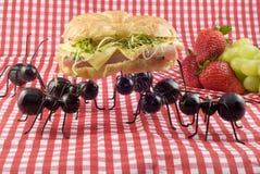 Fourmis volant la nourriture de pique-nique photographie stock
