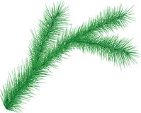 Fourrure-arbre Images libres de droits