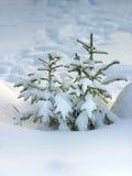 Fourrure-arbre dans la neige Photos libres de droits