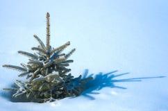 Fourrure-arbre normal sous tension sur la neige Image stock