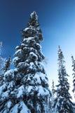 Fourrure-arbres sous une neige Photo libre de droits