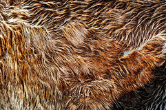 Fourrure de Brown Images stock