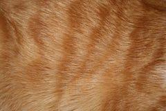 Fourrure de chat Photographie stock libre de droits