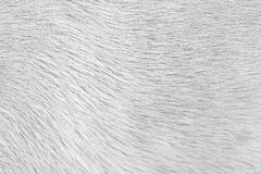 Fourrure de chien Image libre de droits