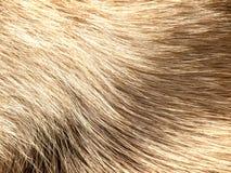 Fourrure de chien Photographie stock libre de droits