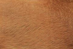 Fourrure de chien Photographie stock
