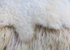 Fourrure de moutons Image libre de droits