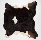 Fourrure de vache (peau) Image stock