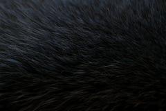 Fourrure gris-foncé Photos stock