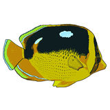 Fourspot-Butterflyfish-Vektor-Illustration Stockfotos