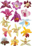 Fourteen orchids collection Stock Photos