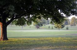 Fourteenth hole framed by a tree Royalty Free Stock Photography