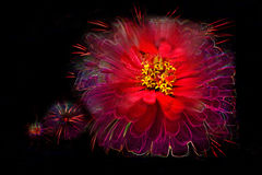 Fourth of July. Abstract flower and fireworks on black background stock photos