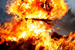 Fourth of July bonfire. Close up image of a burning pine branch in a Fourth of July (U.S. Independence Day) celebration. Image shows the intense orange, yellow Royalty Free Stock Images